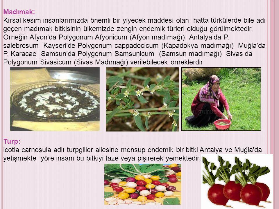 Madımak: Kırsal kesim insanlarımızda önemli bir yiyecek maddesi olan hatta türkülerde bile adı geçen madımak bitkisinin ülkemizde zengin endemik türleri olduğu görülmektedir. Örneğin Afyon'da Polygonum Afyonicum (Afyon madımağı) Antalya'da P. salebrosum Kayseri'de Polygonum cappadocicum (Kapadokya madımağı) Muğla'da P. Karacae Samsun'da Polygonum Samsunicum (Samsun madımağı) Sivas da Polygonum Sivasicum (Sivas Madımağı) verilebilecek örneklerdir