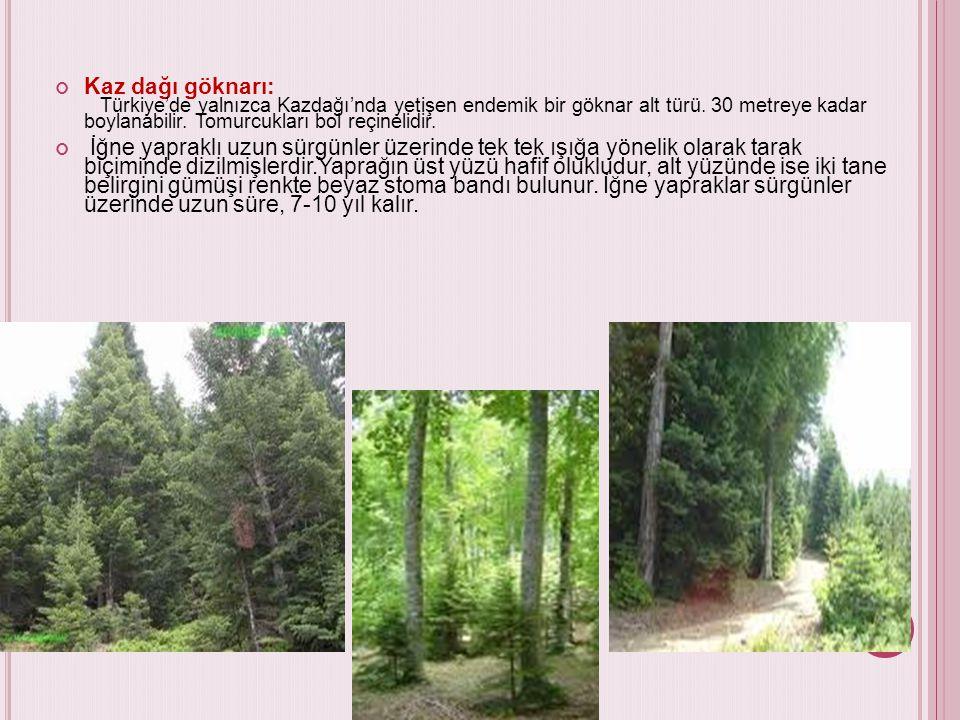 Kaz dağı göknarı: Türkiye'de yalnızca Kazdağı'nda yetişen endemik bir göknar alt türü. 30 metreye kadar boylanabilir. Tomurcukları bol reçinelidir.