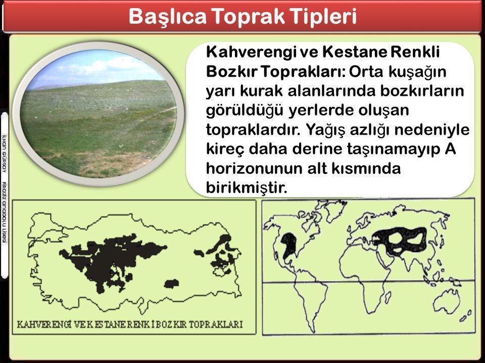 Başlıca Toprak Tipleri