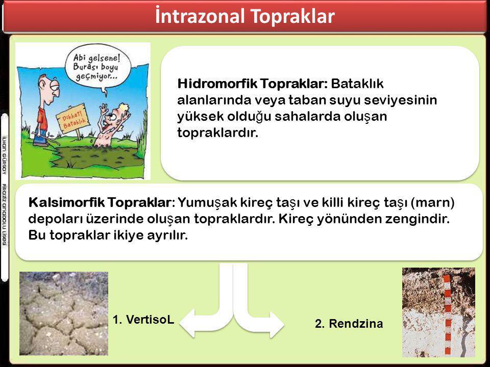 İntrazonal Topraklar Hidromorfik Topraklar: Bataklık alanlarında veya taban suyu seviyesinin yüksek olduğu sahalarda oluşan topraklardır.