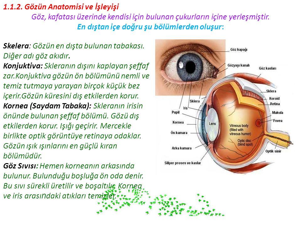 1.1.2. Gözün Anatomisi ve İşleyişi
