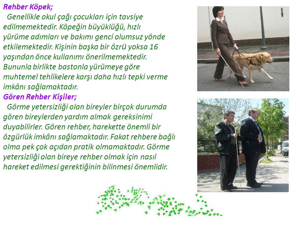 Rehber Köpek; Genellikle okul çağı çocukları için tavsiye edilmemektedir. Köpeğin büyüklüğü, hızlı.