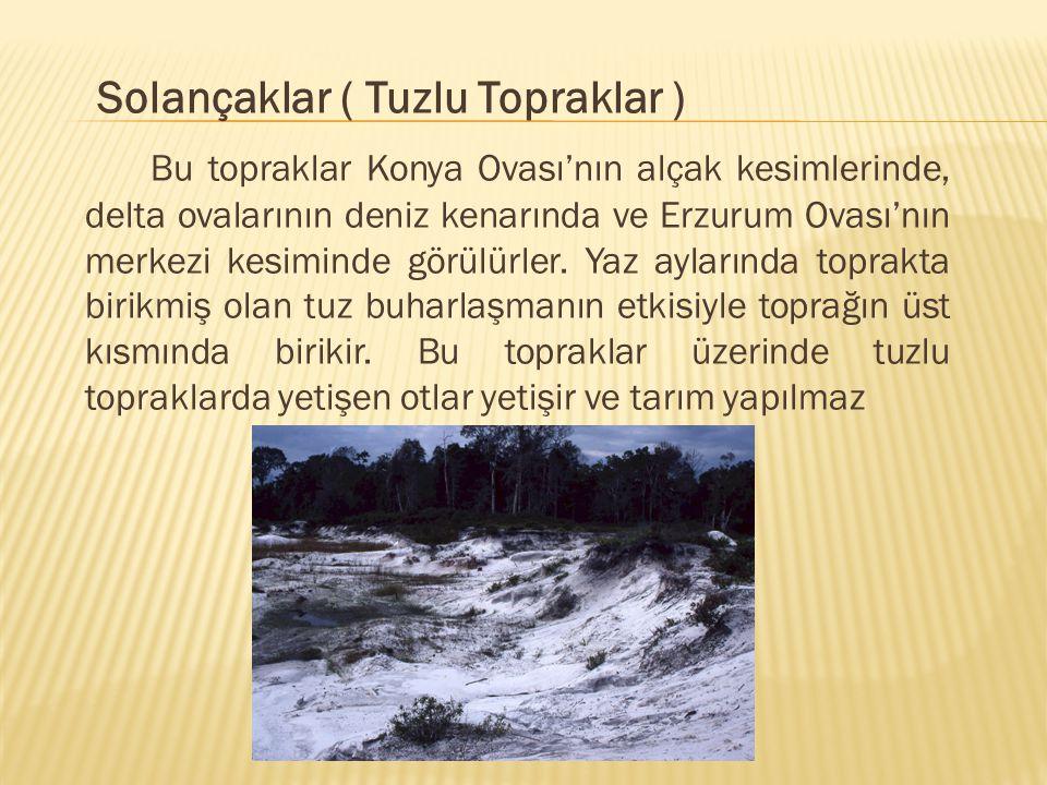 Solançaklar ( Tuzlu Topraklar ) Bu topraklar Konya Ovası'nın alçak kesimlerinde, delta ovalarının deniz kenarında ve Erzurum Ovası'nın merkezi kesiminde görülürler.