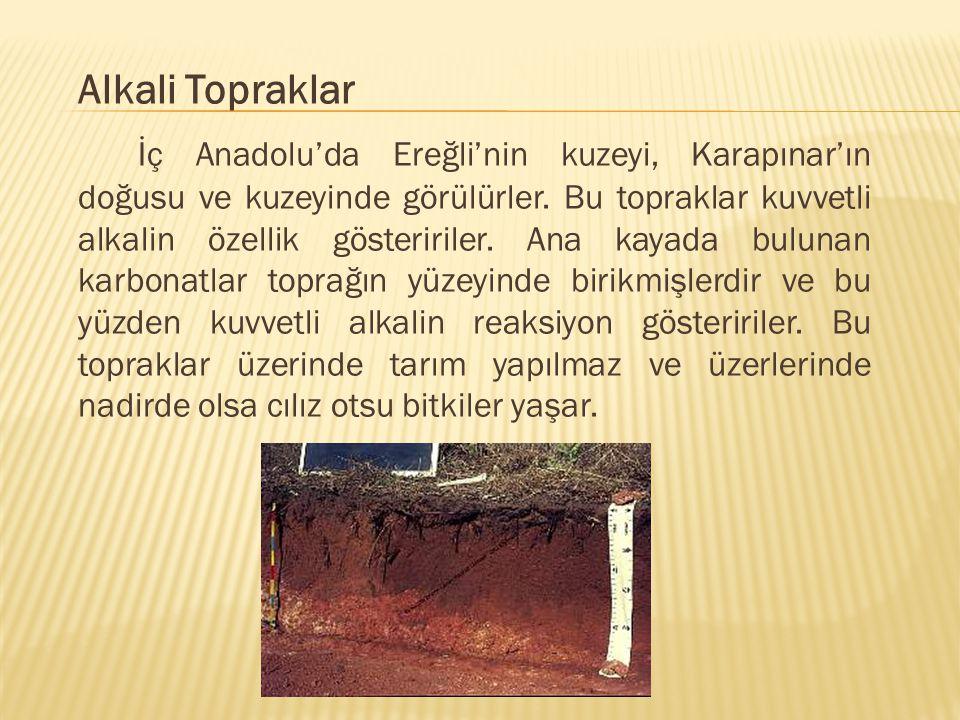 Alkali Topraklar İç Anadolu'da Ereğli'nin kuzeyi, Karapınar'ın doğusu ve kuzeyinde görülürler.