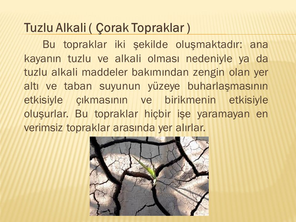 Tuzlu Alkali ( Çorak Topraklar )