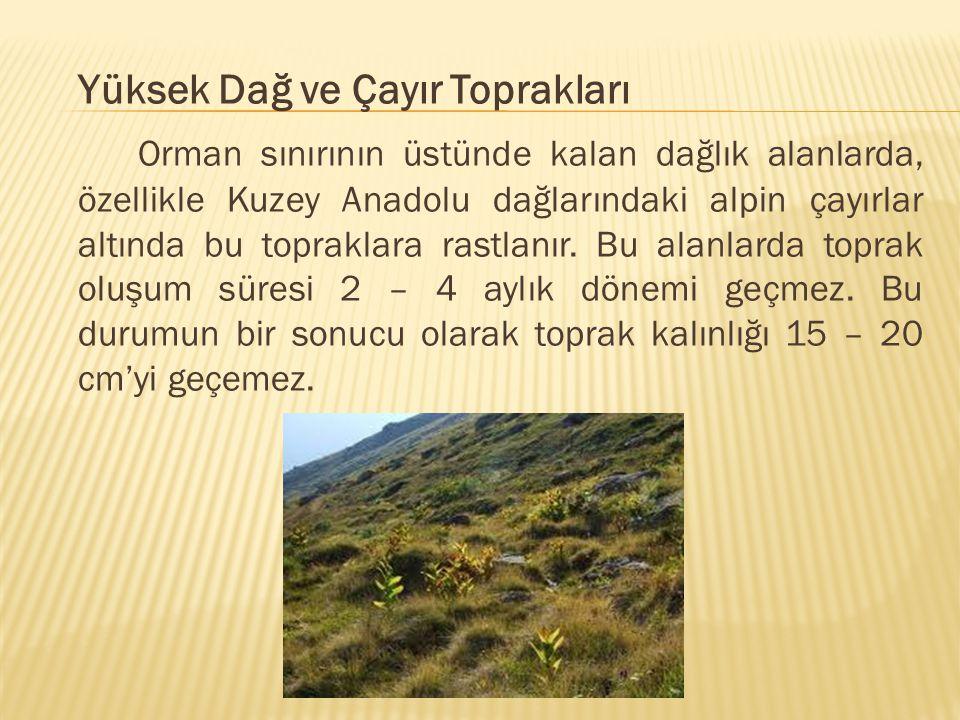 Yüksek Dağ ve Çayır Toprakları Orman sınırının üstünde kalan dağlık alanlarda, özellikle Kuzey Anadolu dağlarındaki alpin çayırlar altında bu topraklara rastlanır.