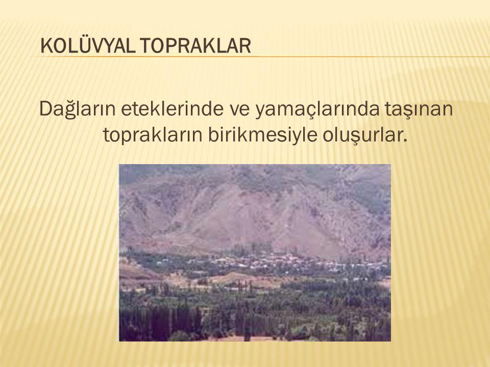 KOLÜVYAL TOPRAKLAR Dağların eteklerinde ve yamaçlarında taşınan toprakların birikmesiyle oluşurlar.