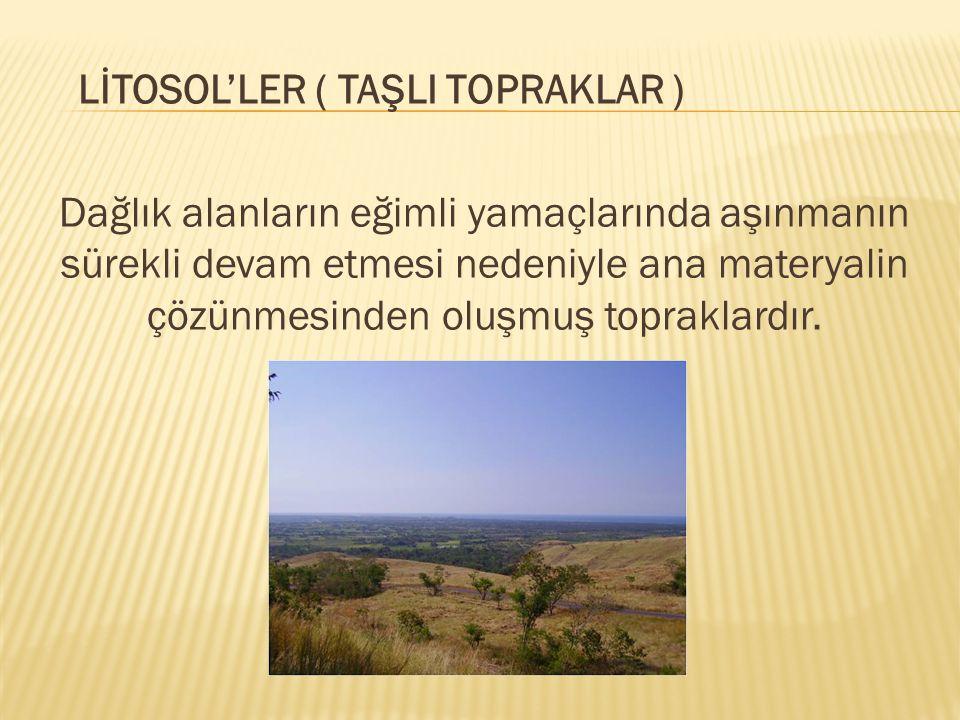 LİTOSOL'LER ( TAŞLI TOPRAKLAR ) Dağlık alanların eğimli yamaçlarında aşınmanın sürekli devam etmesi nedeniyle ana materyalin çözünmesinden oluşmuş topraklardır.