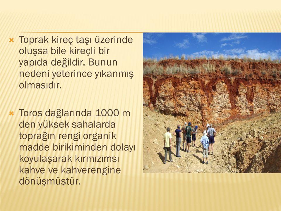 Toprak kireç taşı üzerinde oluşsa bile kireçli bir yapıda değildir