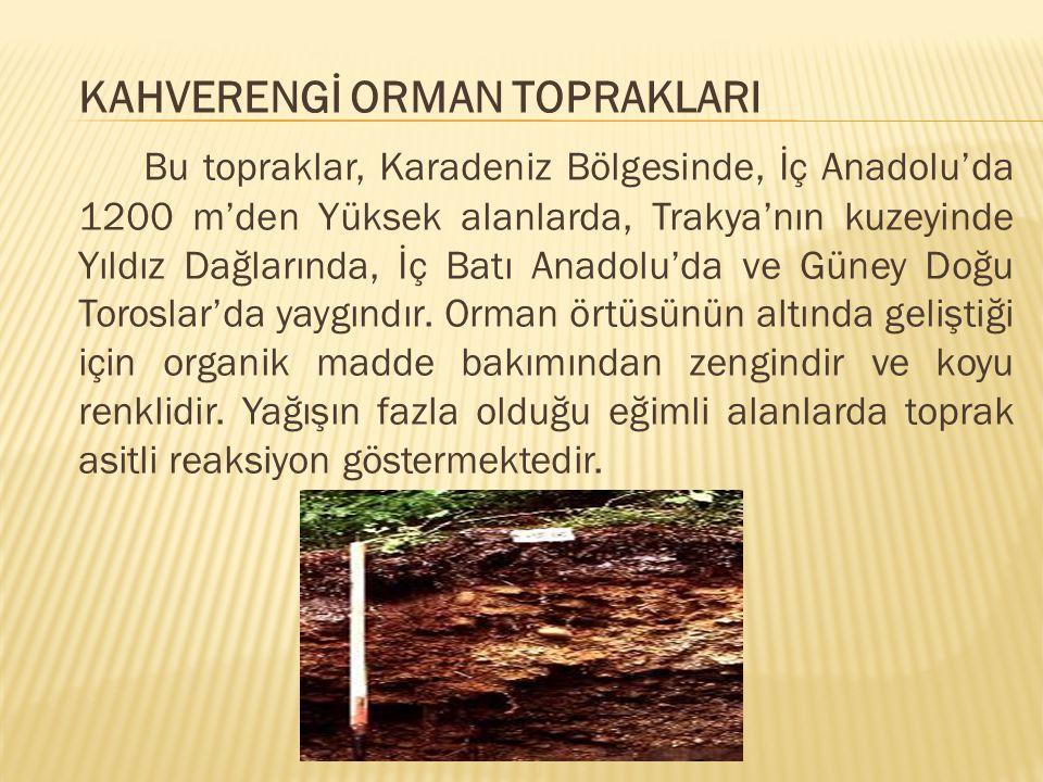KAHVERENGİ ORMAN TOPRAKLARI Bu topraklar, Karadeniz Bölgesinde, İç Anadolu'da 1200 m'den Yüksek alanlarda, Trakya'nın kuzeyinde Yıldız Dağlarında, İç Batı Anadolu'da ve Güney Doğu Toroslar'da yaygındır.