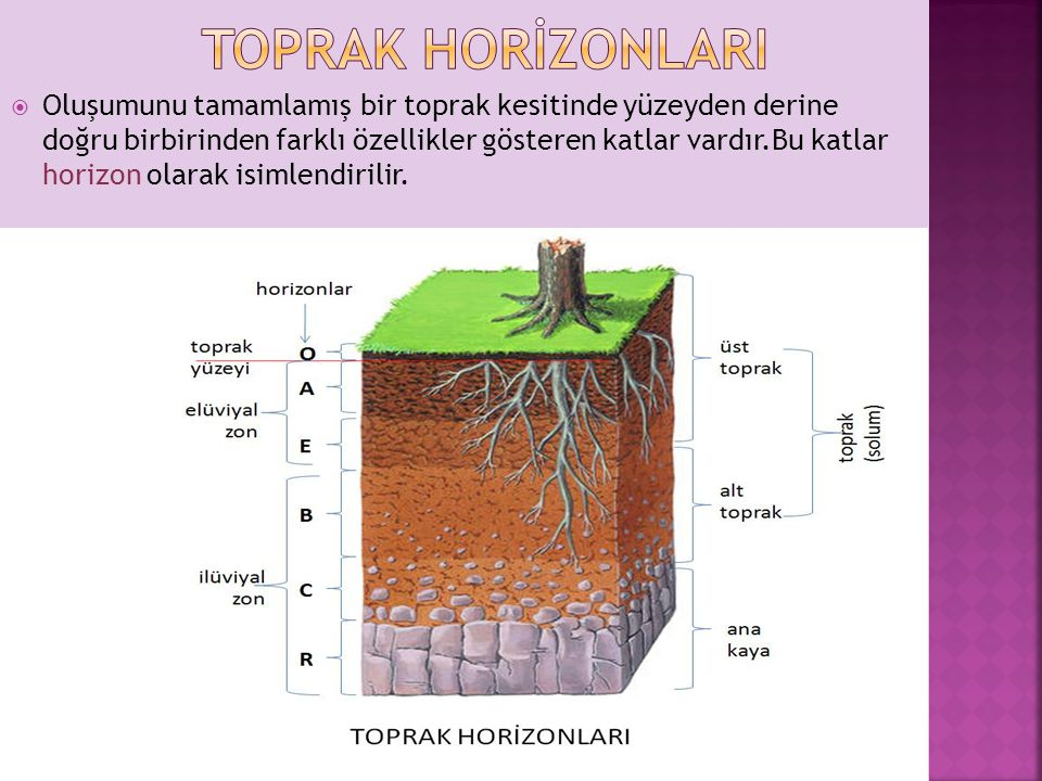 Toprak horİzonlarI