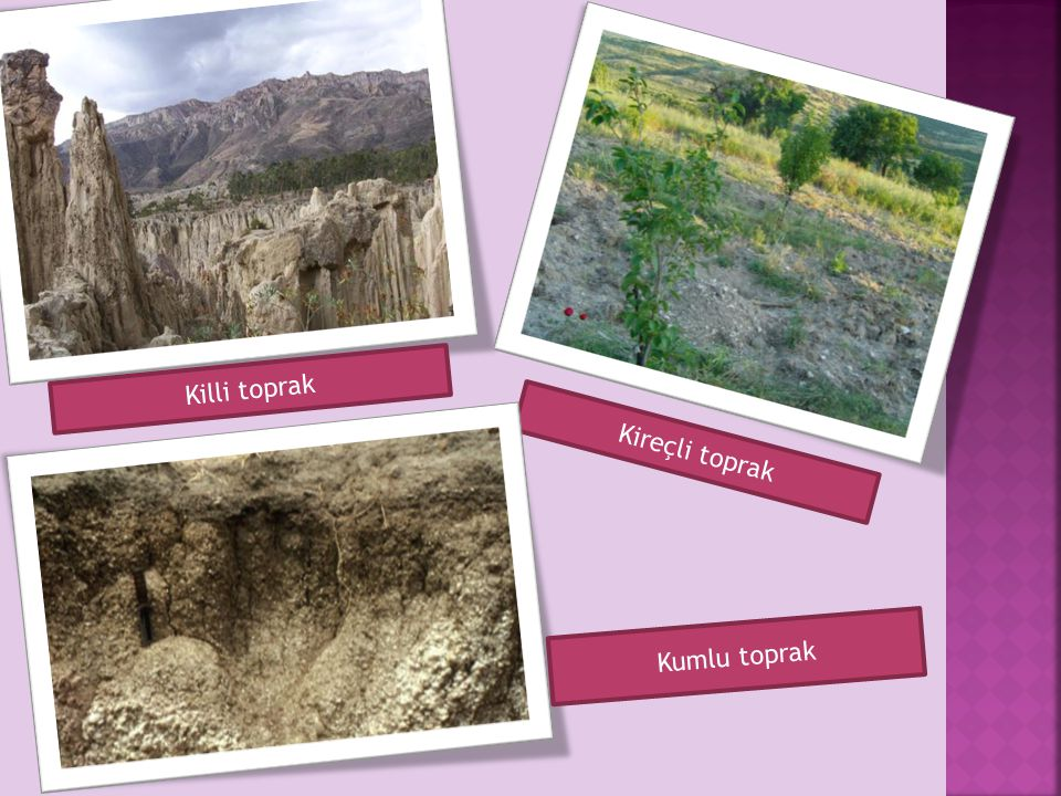 Killi toprak Kireçli toprak Kumlu toprak