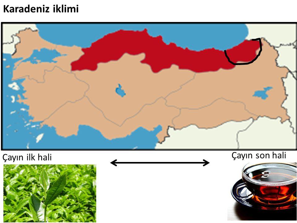 Karadeniz iklimi Çayın son hali Çayın ilk hali