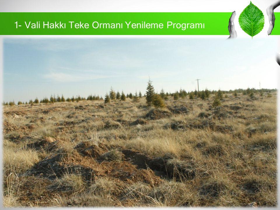 1- Vali Hakkı Teke Ormanı Yenileme Programı