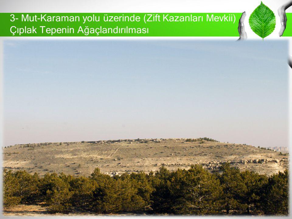 3- Mut-Karaman yolu üzerinde (Zift Kazanları Mevkii) Çıplak Tepenin Ağaçlandırılması