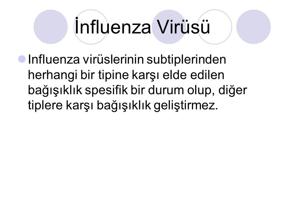 İnfluenza Virüsü