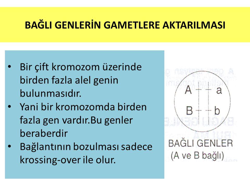 BAĞLI GENLERİN GAMETLERE AKTARILMASI
