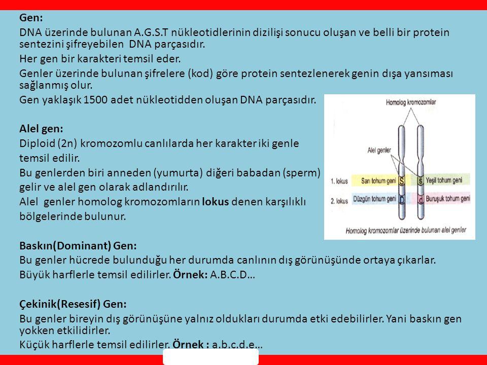 Gen: DNA üzerinde bulunan A. G. S
