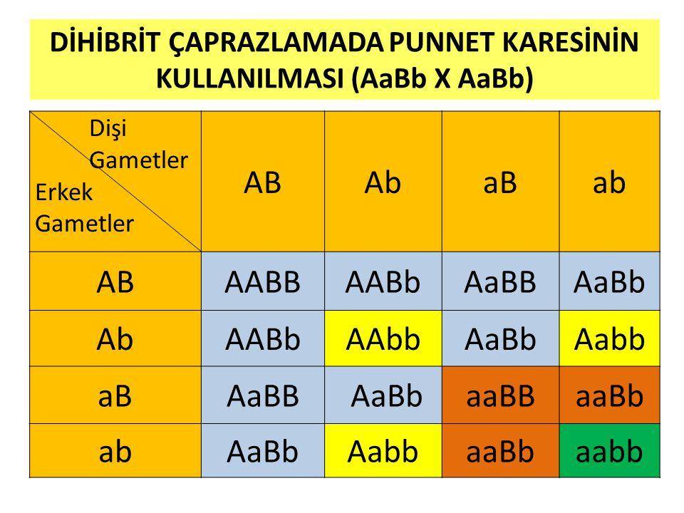DİHİBRİT ÇAPRAZLAMADA PUNNET KARESİNİN KULLANILMASI (AaBb X AaBb)