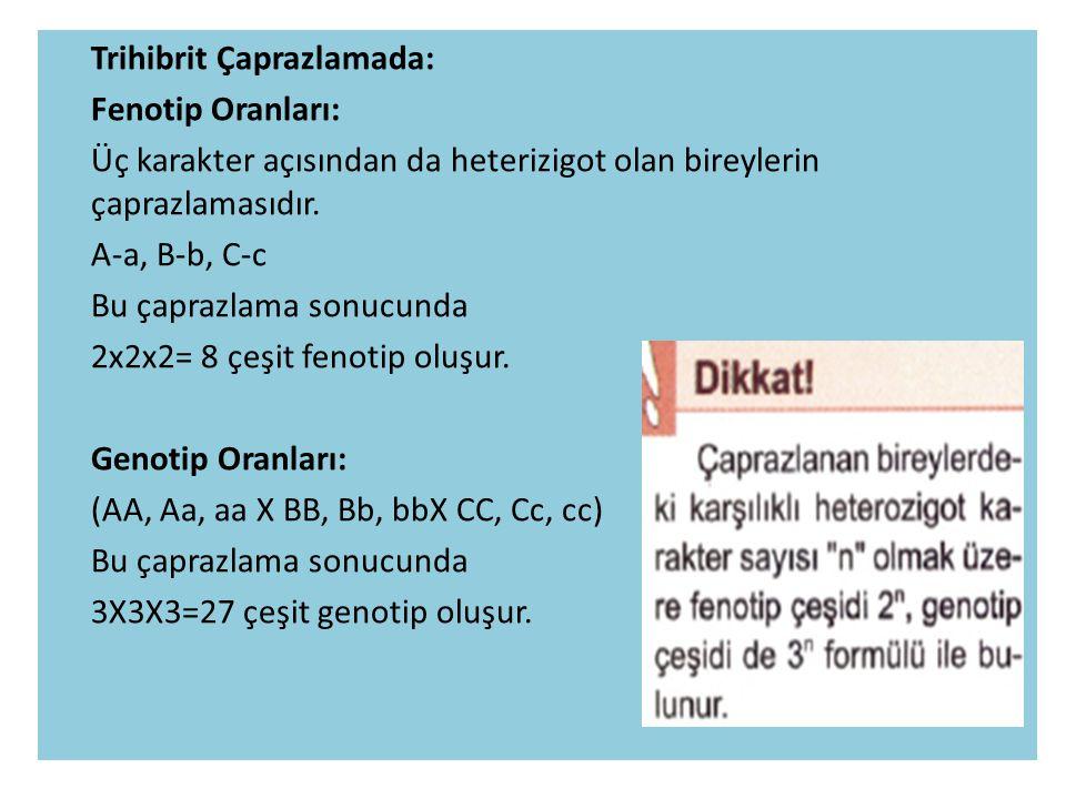 Trihibrit Çaprazlamada: Fenotip Oranları: Üç karakter açısından da heterizigot olan bireylerin çaprazlamasıdır.