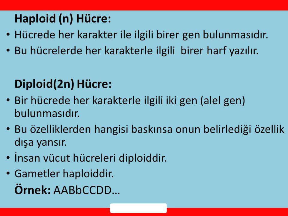 Haploid (n) Hücre: Diploid(2n) Hücre: Örnek: AABbCCDD…