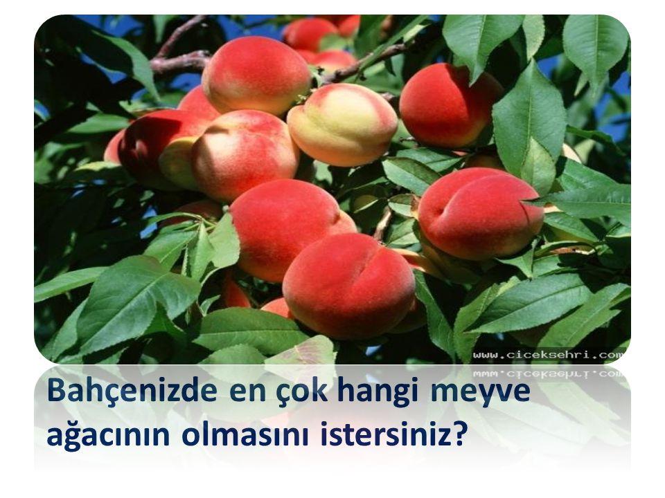 Bahçenizde en çok hangi meyve ağacının olmasını istersiniz