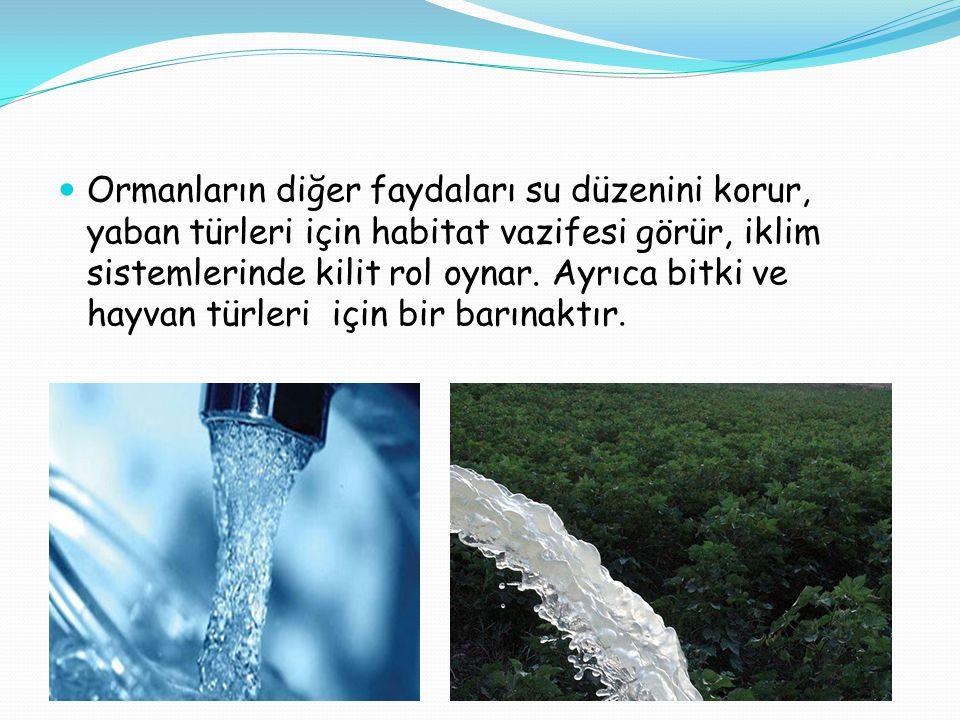 Ormanların diğer faydaları su düzenini korur, yaban türleri için habitat vazifesi görür, iklim sistemlerinde kilit rol oynar.