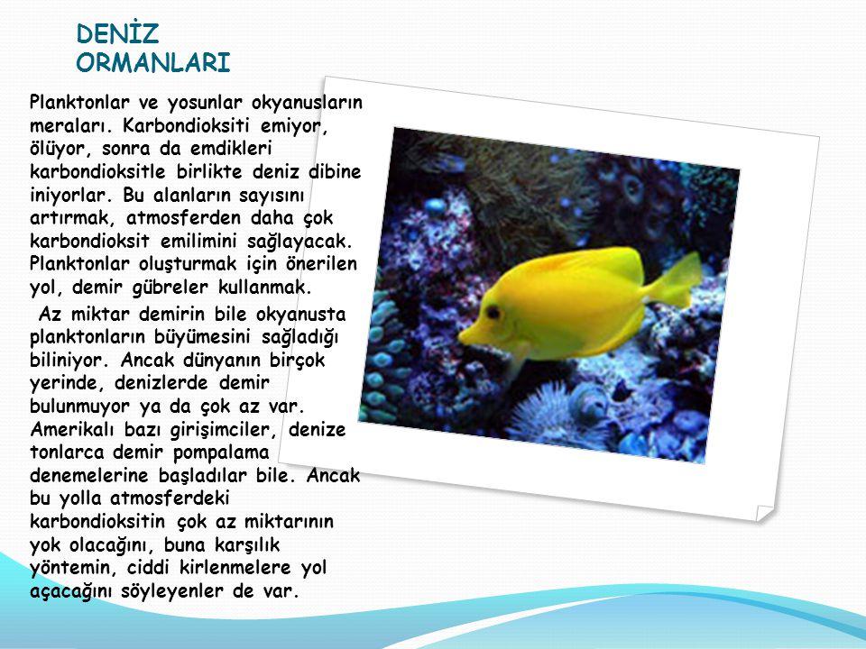 DENİZ ORMANLARI