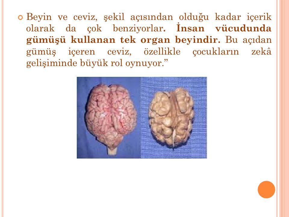 Beyin ve ceviz, şekil açısından olduğu kadar içerik olarak da çok benziyorlar.