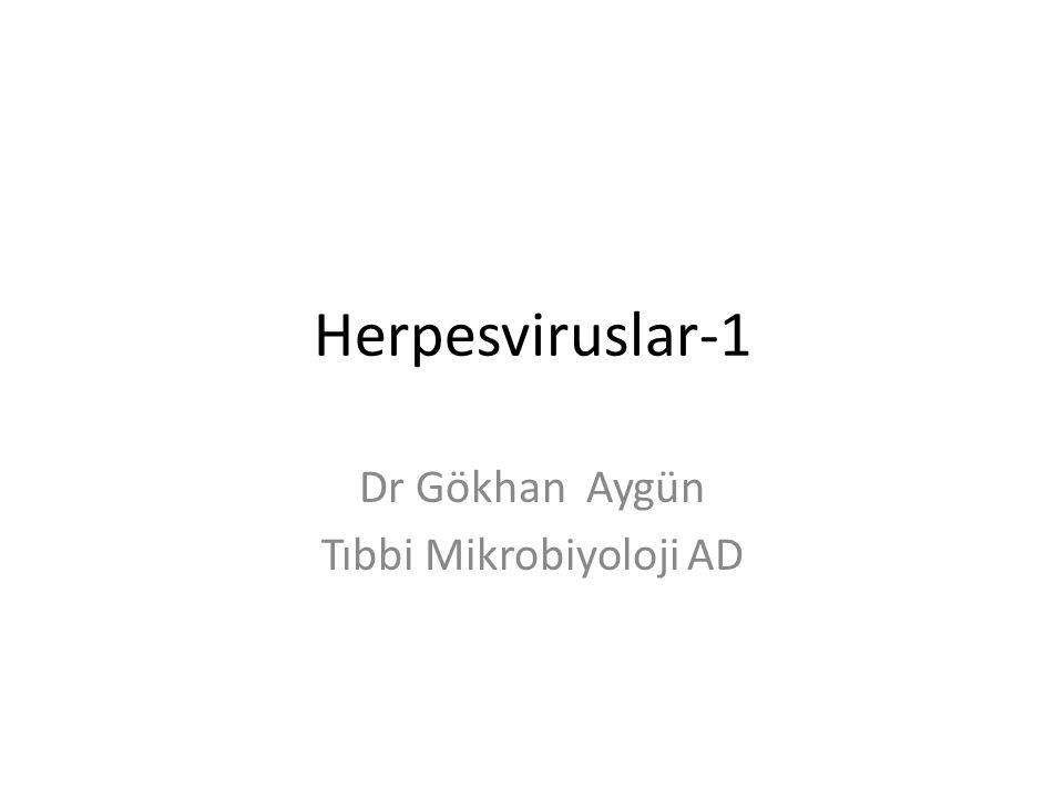 Dr Gökhan Aygün Tıbbi Mikrobiyoloji AD