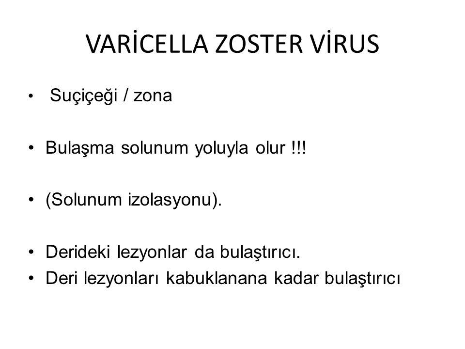 VARİCELLA ZOSTER VİRUS