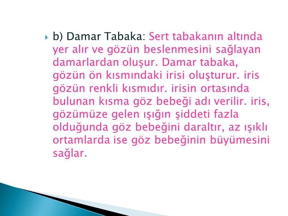 b) Damar Tabaka: Sert tabakanın altında yer alır ve gözün beslenmesini sağlayan damarlardan oluşur.
