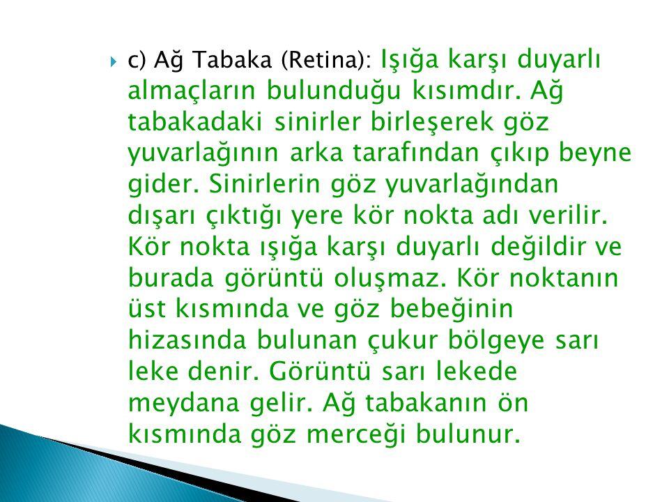 c) Ağ Tabaka (Retina): Işığa karşı duyarlı almaçların bulunduğu kısımdır.