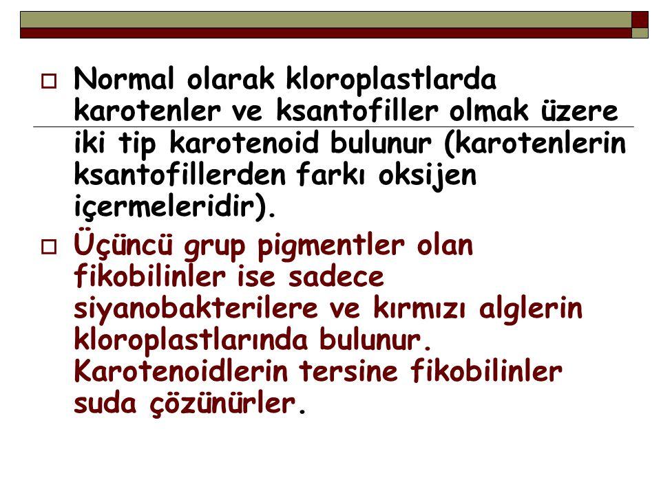 Normal olarak kloroplastlarda karotenler ve ksantofiller olmak üzere iki tip karotenoid bulunur (karotenlerin ksantofillerden farkı oksijen içermeleridir).