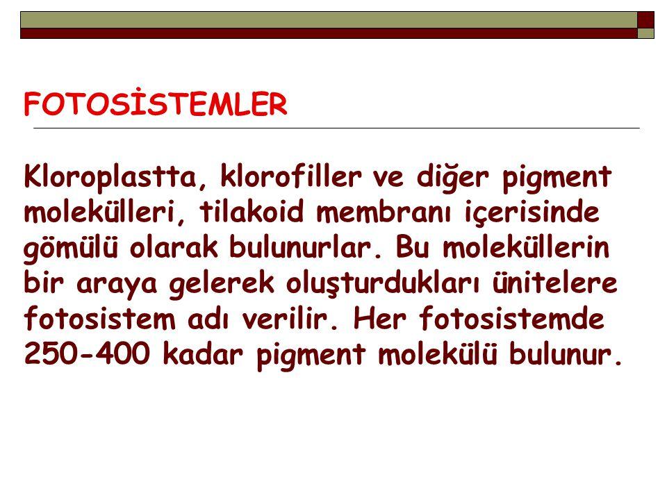 FOTOSİSTEMLER
