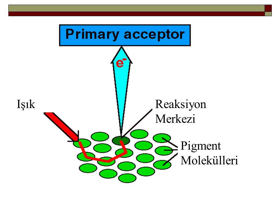 Işık Reaksiyon Merkezi Pigment Molekülleri