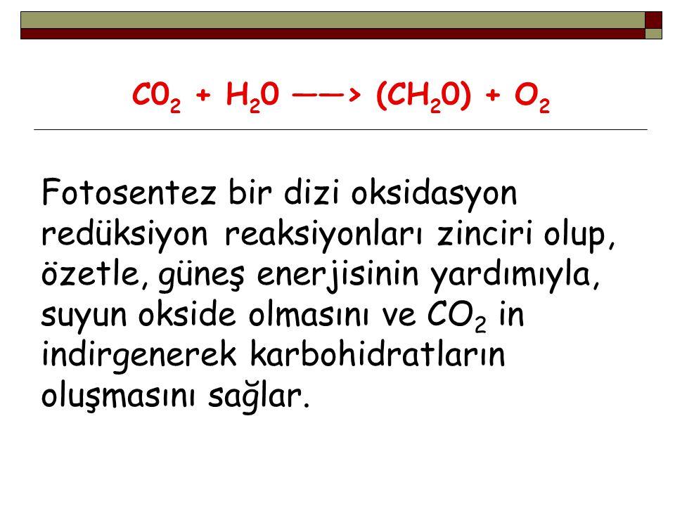 C02 + H20 ——> (CH20) + O2 Fotosentez bir dizi oksidasyon redüksiyon reaksiyonları zinciri olup, özetle, güneş enerjisinin yardımıyla, suyun okside olmasını ve CO2 in indirgenerek karbohidratların oluşmasını sağlar.