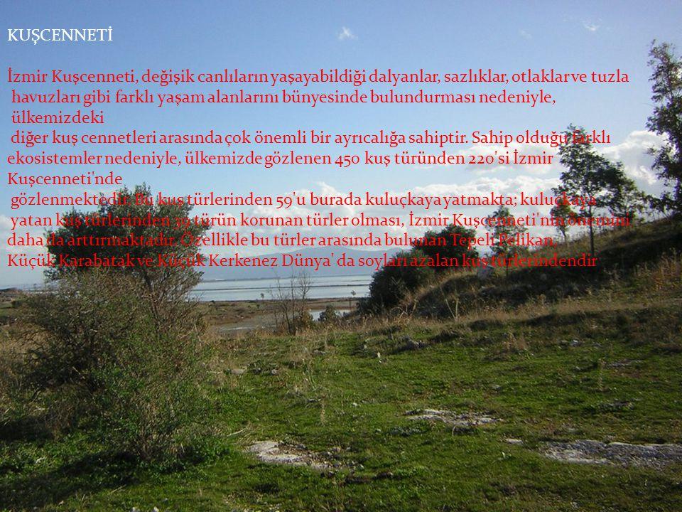 KUŞCENNETİ İzmir Kuşcenneti, değişik canlıların yaşayabildiği dalyanlar, sazlıklar, otlaklar ve tuzla.
