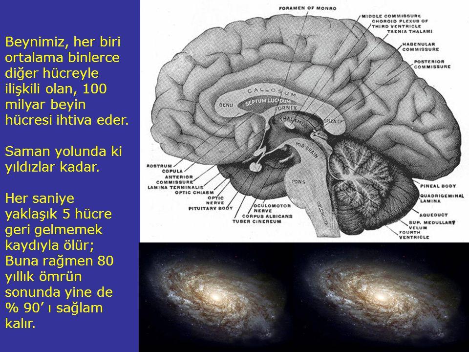 Beynimiz, her biri ortalama binlerce diğer hücreyle ilişkili olan, 100 milyar beyin hücresi ihtiva eder.