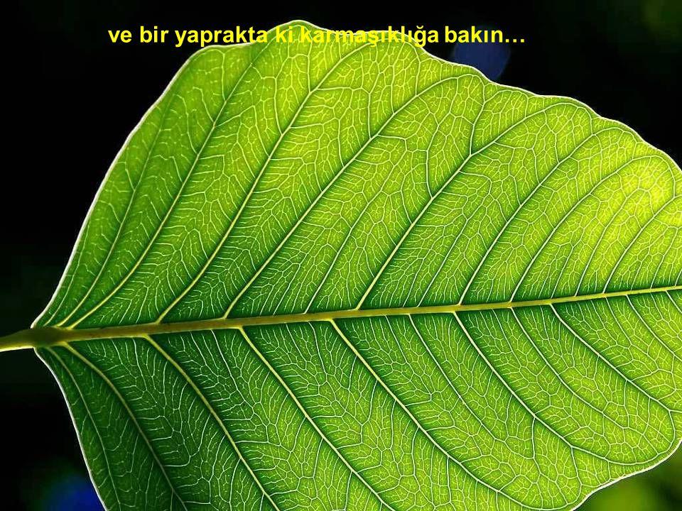 ve bir yaprakta ki karmaşıklığa bakın…
