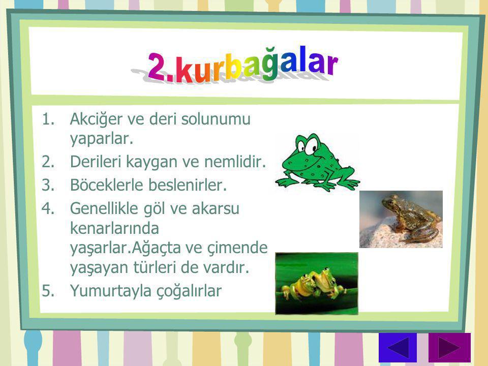 2.kurbağalar Akciğer ve deri solunumu yaparlar.