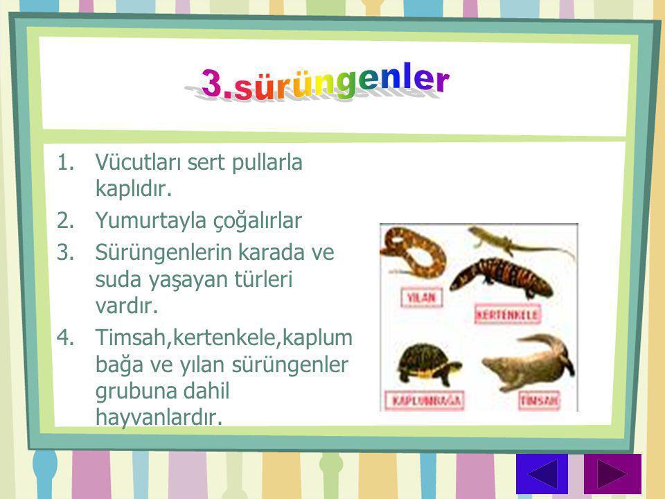 3.sürüngenler Vücutları sert pullarla kaplıdır. Yumurtayla çoğalırlar