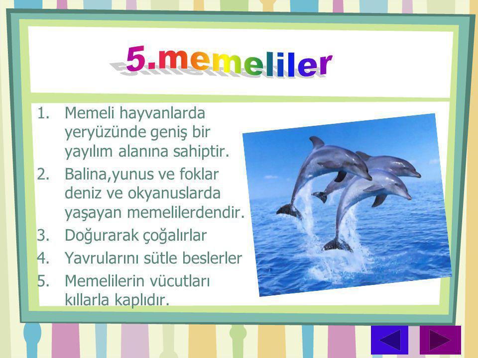 5.memeliler Memeli hayvanlarda yeryüzünde geniş bir yayılım alanına sahiptir. Balina,yunus ve foklar deniz ve okyanuslarda yaşayan memelilerdendir.