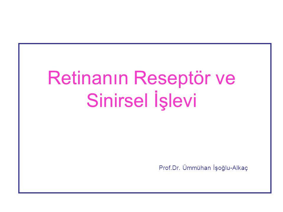Retinanın Reseptör ve Sinirsel İşlevi