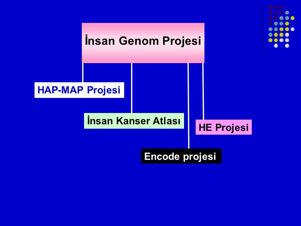 İnsan Genom Projesi HAP-MAP Projesi İnsan Kanser Atlası HE Projesi