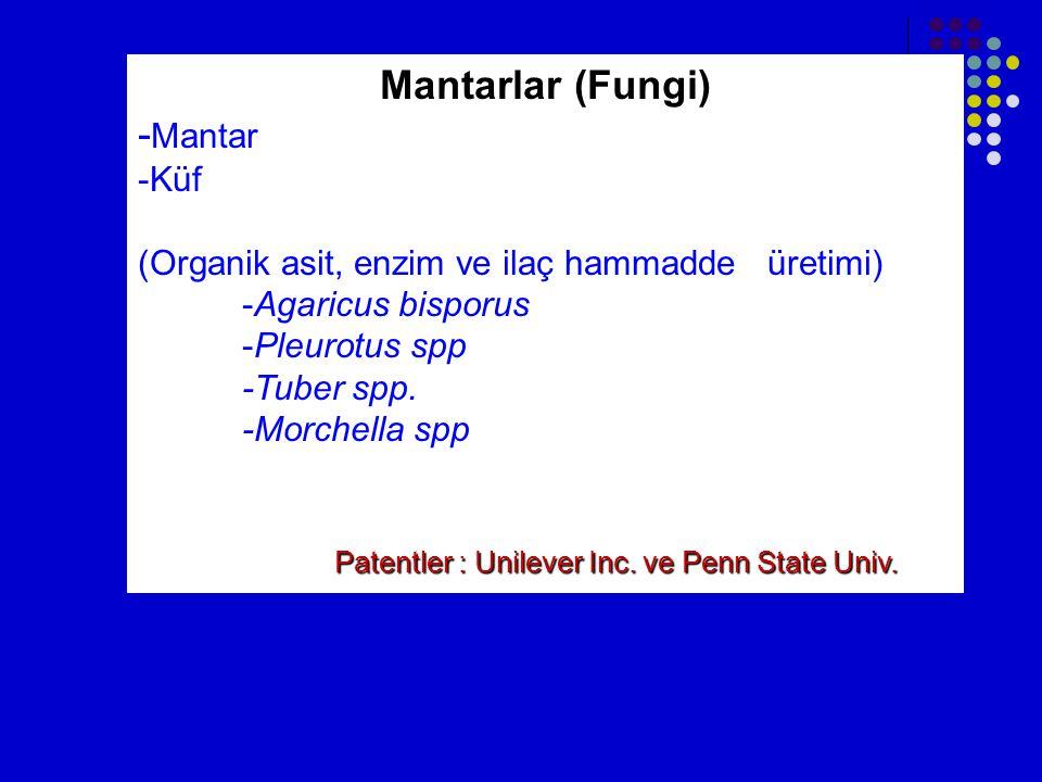 Mantarlar (Fungi) -Mantar -Küf