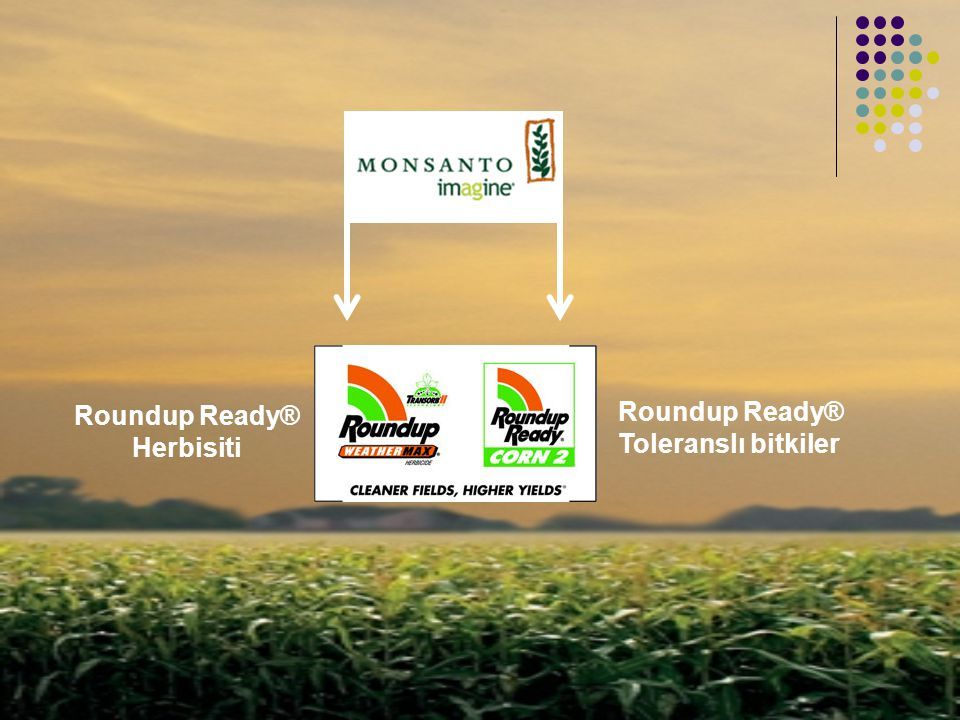 Roundup Ready® Herbisiti Roundup Ready® Toleranslı bitkiler
