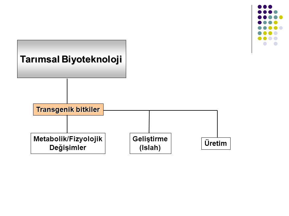 Metabolik/Fizyolojik
