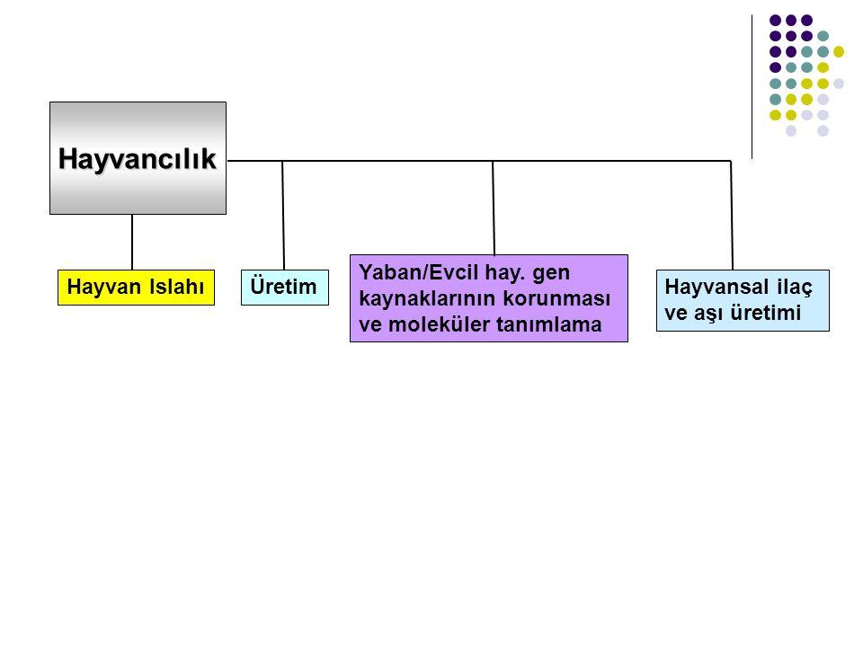 Hayvancılık Hayvan Islahı Üretim Yaban/Evcil hay. gen