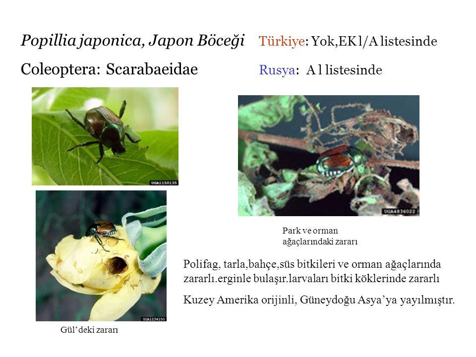 Popillia japonica, Japon Böceği Türkiye: Yok,EK l/A listesinde